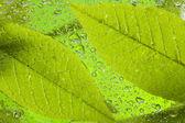 Leaf after rain — Stock Photo