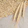 Cereals on burlap background — Stock Photo #5776033