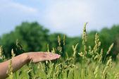 Hand touching grass — Stock Photo