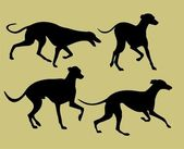 Silhouettes of greyhounds — Stock Vector