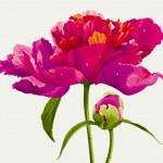 Red peony flower — Stock Vector