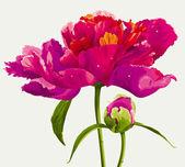 红牡丹花卉 — 图库矢量图片