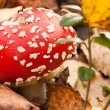 Royalty-Free Stock Photo: One red mushroom (toadstool).