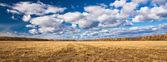Panorama. campo amarillo extendida de siega con lejos de árboles. — Foto de Stock