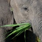 Elephant — Stock Photo #5537664