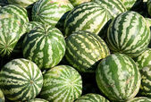 Water-melons — Stock Photo