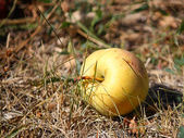 Apple in a grass — Stock Photo