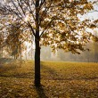 Autumn in park — Stock Photo #5754841