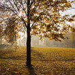 Stock Photo: Autumn in park