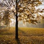 Autumn in park — Stock Photo #5754841