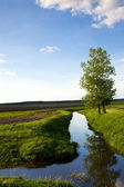 Tree about the small river — Stock Photo