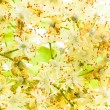 Royalty-Free Stock Photo: Linden flowers