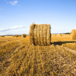 Straw stack — Stock Photo #6642043