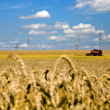 Agriculture — Stock Photo #6644035