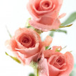Three Roses — Stock Photo #5402381