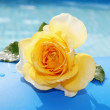 Yellow rose on a blue background — Photo