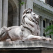 Foto Stock: Library Lion