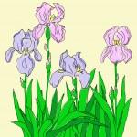 Color iris — Stock Vector #6248465