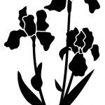Iris black — Stock Vector #6401734