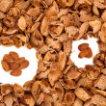 Almond kernels among hulls — Stock Photo