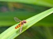 Volare sull'erba — Foto Stock