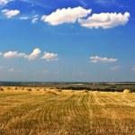 Field of ripe wheat — Stock Photo #6530861