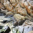 Stock Photo: Coastal rocks