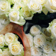 Beautiful white roses — Stock Photo