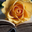 Old book and fresh rose — Stock Photo #6257791