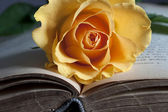Old book and fresh rose — Stock Photo