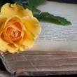 Old book and fresh rose — Stock Photo #6336388