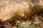 Malas hierbas secas — Foto de Stock