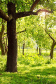 Jardim rural — Fotografia Stock