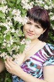 Efflorescent bush — Stock Photo