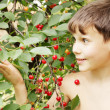 Boy holds cherries — ストック写真