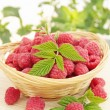 Raspberries in the basket - Stock Photo