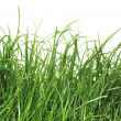 Fresh green grass with dew drops - Stock Photo
