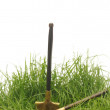 Green grass with garden tools - 