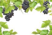 Cadre de vigne fraîches avec des raisins noirs, isolé sur fond blanc — Photo