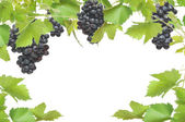 Fresh grapevine frame with black grapes, isolated on white background — ストック写真