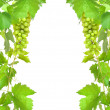Foto Stock: Border of fresh grapevine with ripe grapes