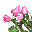 Pink roses bouquet on white — Stock Photo