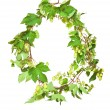 Branch of hop on white background - Stock Photo
