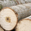 Lumber pile - Stock Photo