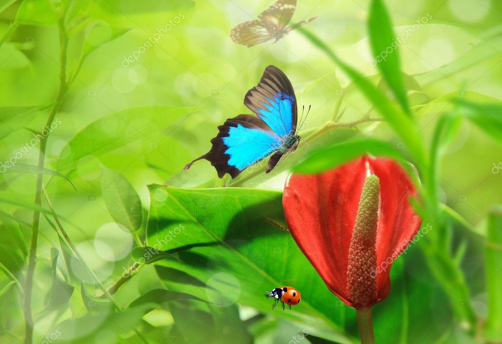Beautiful nature theme stock photo kesu01 5971416 for Ideanature