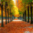 Beautiful autumn alley - Stock Photo