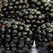 Blackberries - Stock Photo