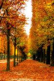 Beautiful autumn alley — Stock Photo