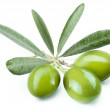Three green olives on the branch. — Stock Photo