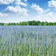 Beautiful field of wild flowers. - Stock Photo